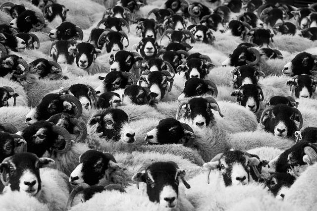 Vous n'êtes pas un mouton !