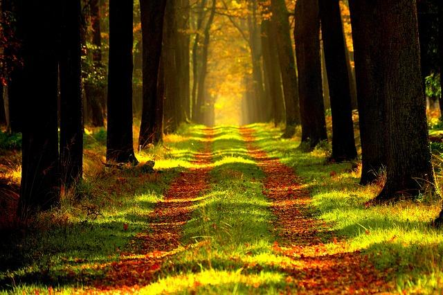 Sentier dans un bois